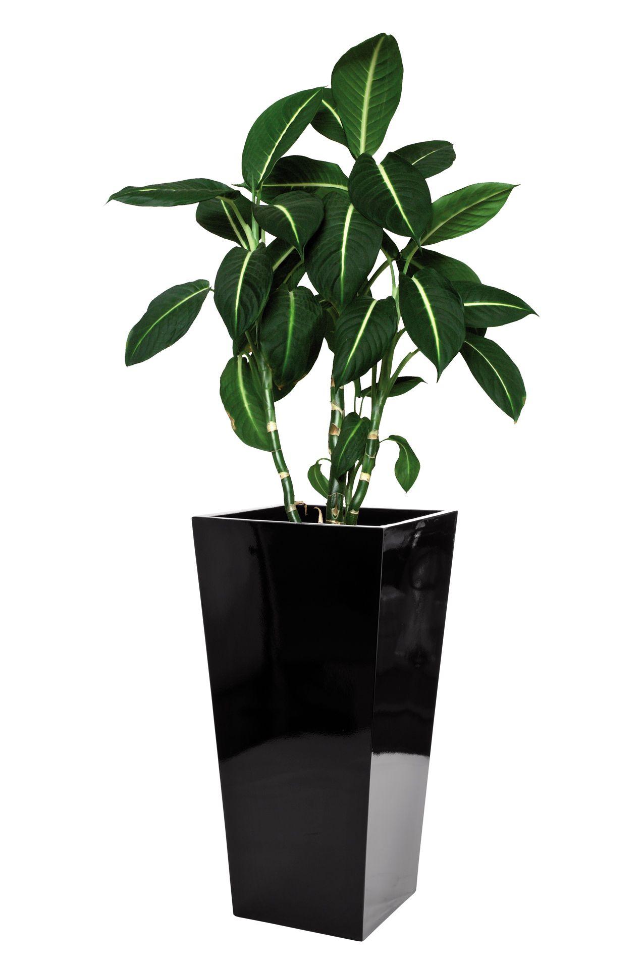 blumenk bel pflanzk bel pflanzgef e fiberglas classic 90cm schwarz hochglanz ebay. Black Bedroom Furniture Sets. Home Design Ideas